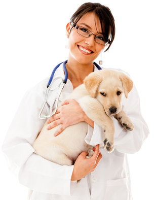 Vet holding a little puppy